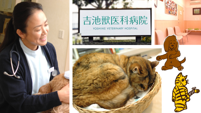 吉池獣医科病院 | 世田谷区豪徳寺 梅ヶ丘 経堂の鍼治療も行える動物病院